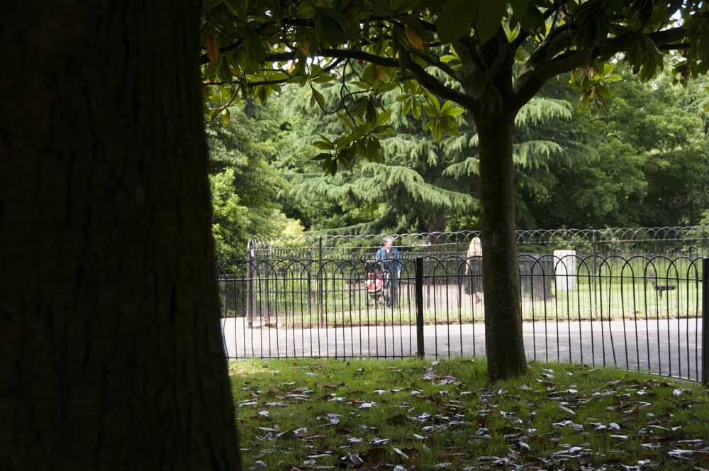 The Friends of Ravenscourt Park_dca0768