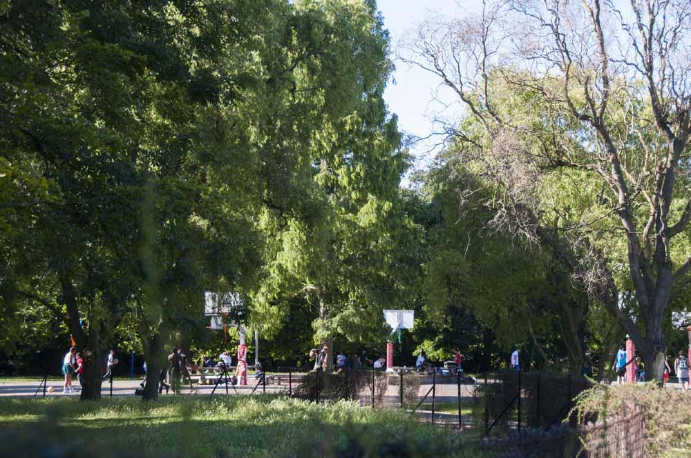 The Friends of Ravenscourt Park_dca0984