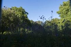 The Friends of Ravenscourt Park_dca1047
